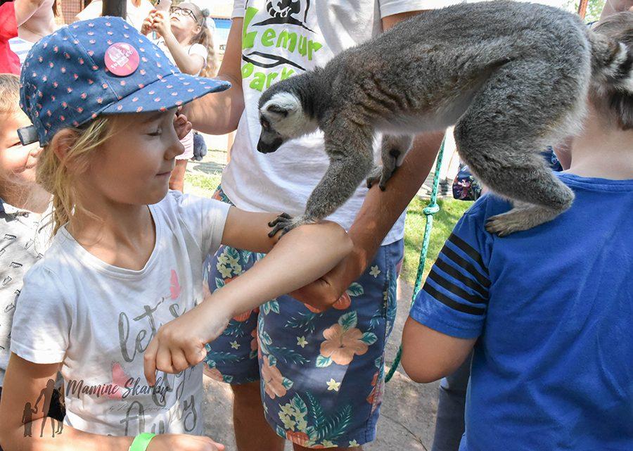 lemur park rumia