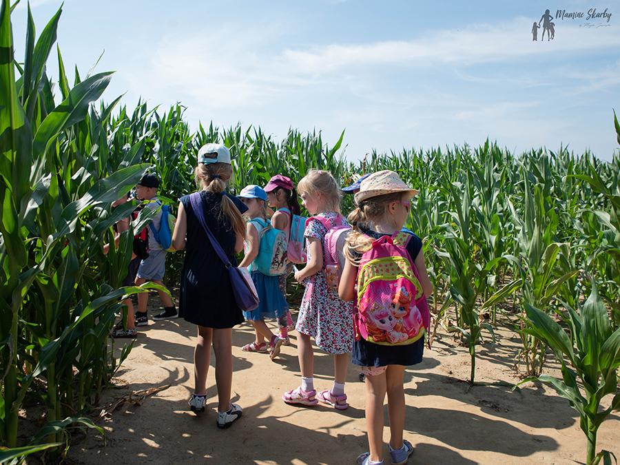 labirynt w kukurydzy swarzewo